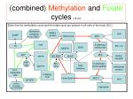 combined methylation and folate cycles 15 20