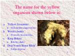 the name for the yellow organism shown below is