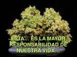 sta es la mayor responsabilidad de nuestra vida
