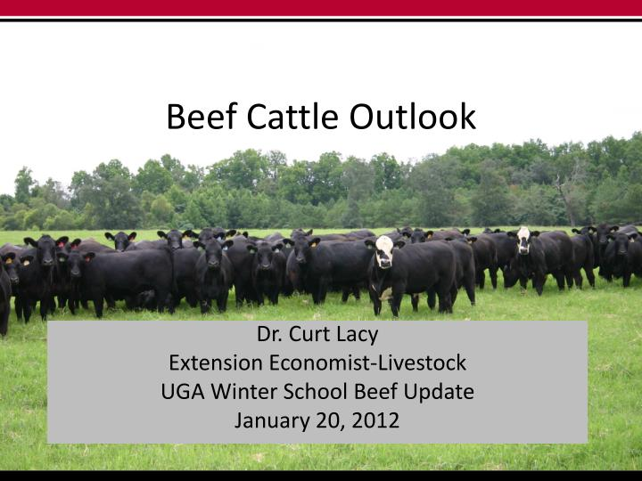 beef cattle outlook n.
