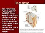 bone tissue2