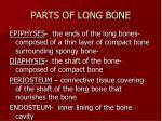 parts of long bone
