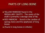 parts of long bone1