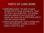 parts of long bone2