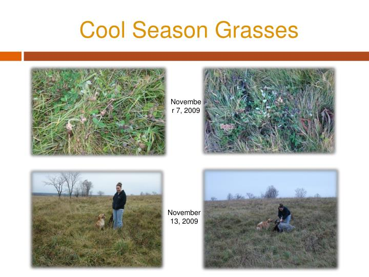 Cool Season Grasses