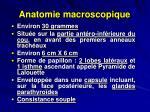 anatomie macroscopique