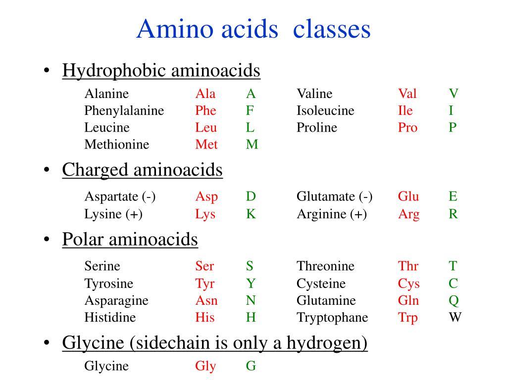 Amino acids  classes