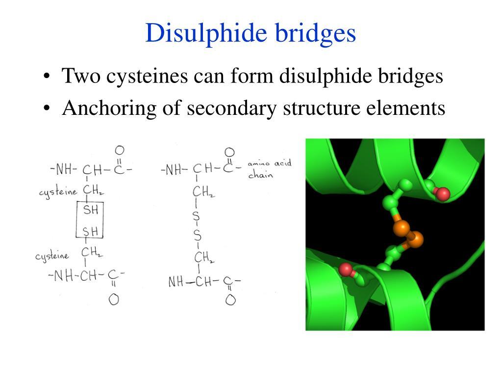Disulphide bridges