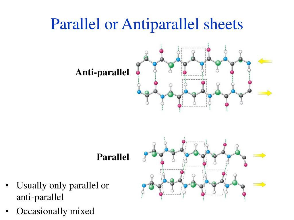 Parallel or Antiparallel sheets