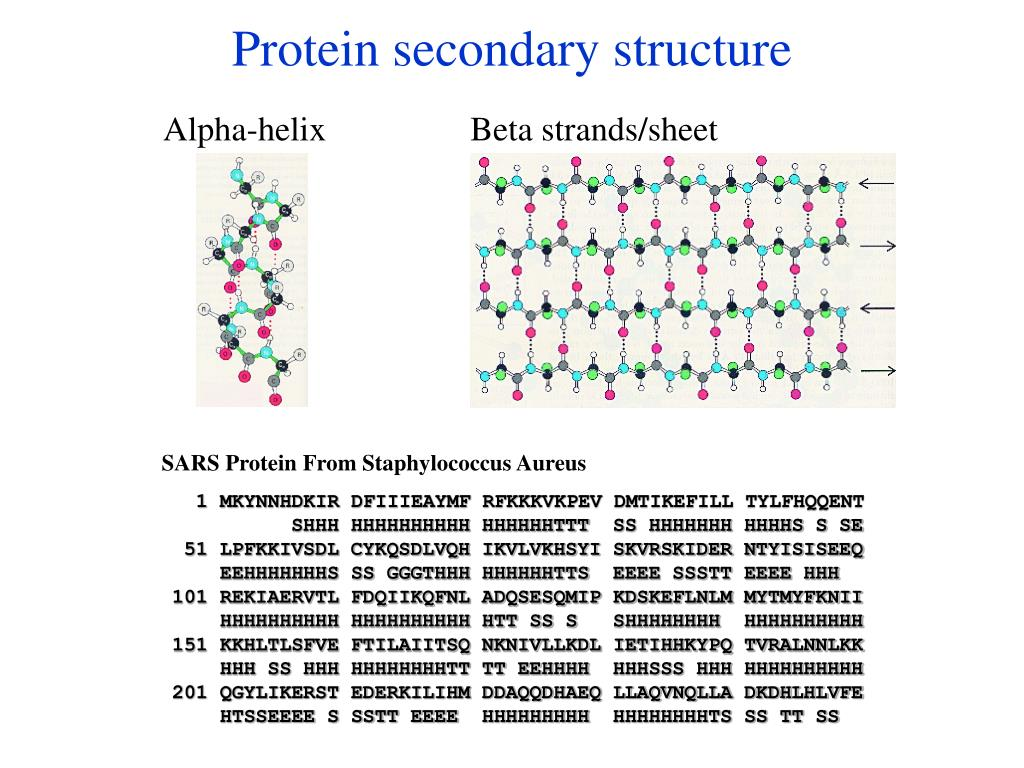 Protein secondary structure
