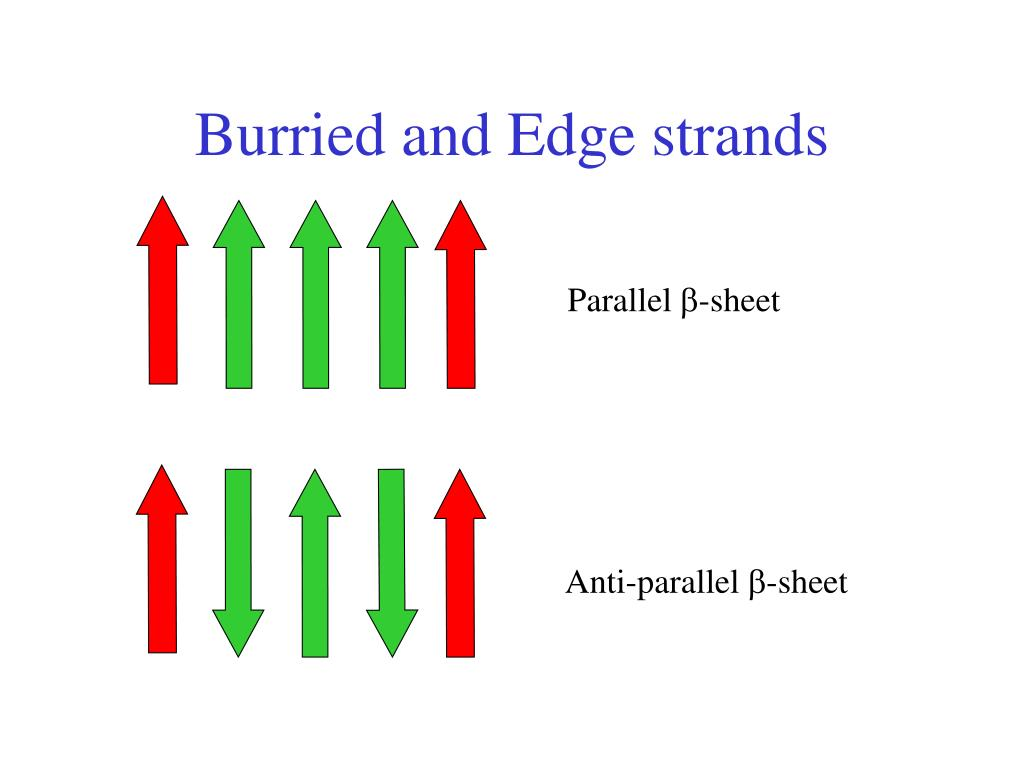 Burried and Edge strands