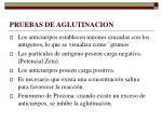 pruebas de aglutinacion1