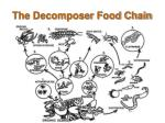 the decomposer food chain