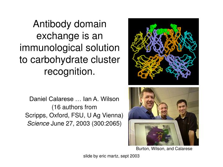 antibody domain exchange is an immunological solution to carbohydrate cluster recognition n.