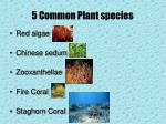 5 common plant species