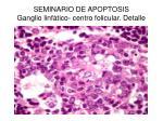 seminario de apoptosis ganglio linf tico centro folicular detalle
