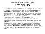 seminario de apoptosis key points