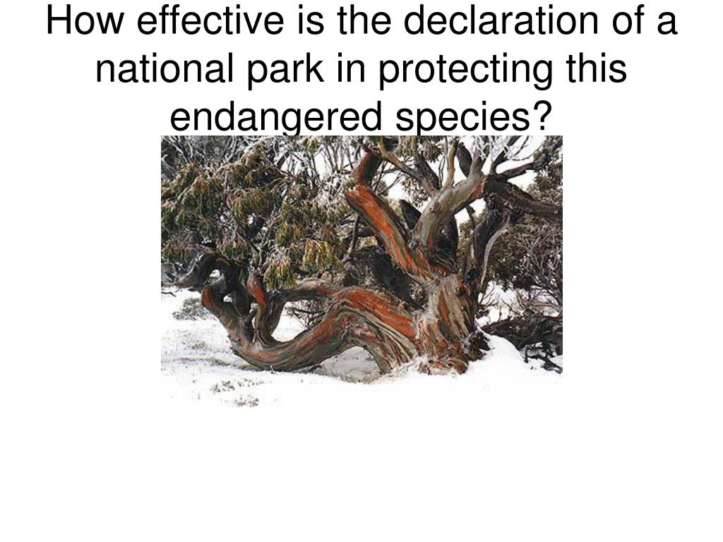 How effective is the declaration of a national park in protecting this endangered species?