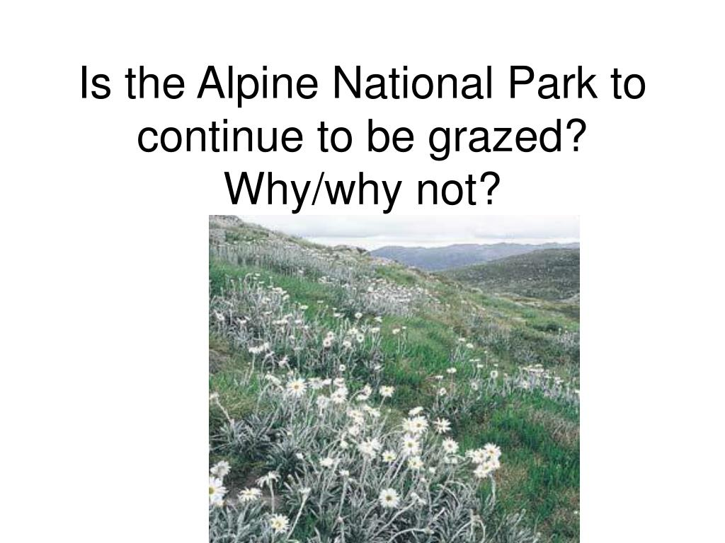 Is the Alpine National Park to continue to be grazed?