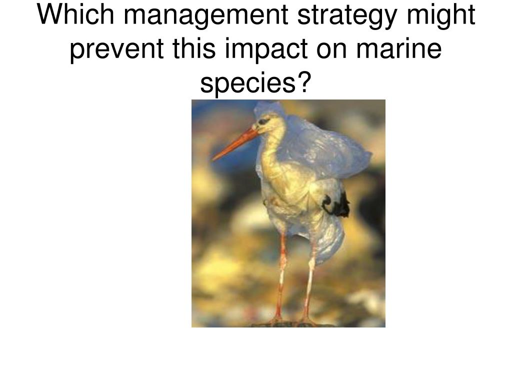 Which management strategy might prevent this impact on marine species?