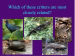 which of these critters are most closely related