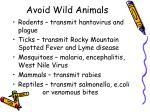 avoid wild animals