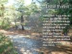 dune forest