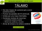 t lamo1