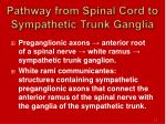 pathway from spinal cord to sympathetic trunk ganglia