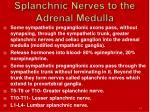 splanchnic nerves to the adrenal medulla