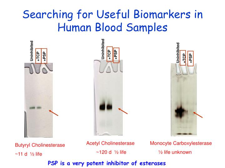 Searching for Useful Biomarkers in