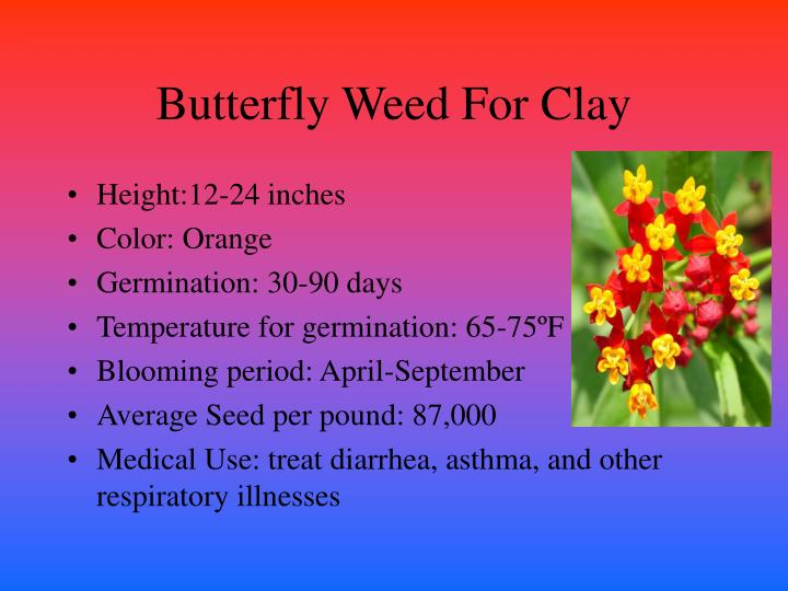 Butterfly weed for clay
