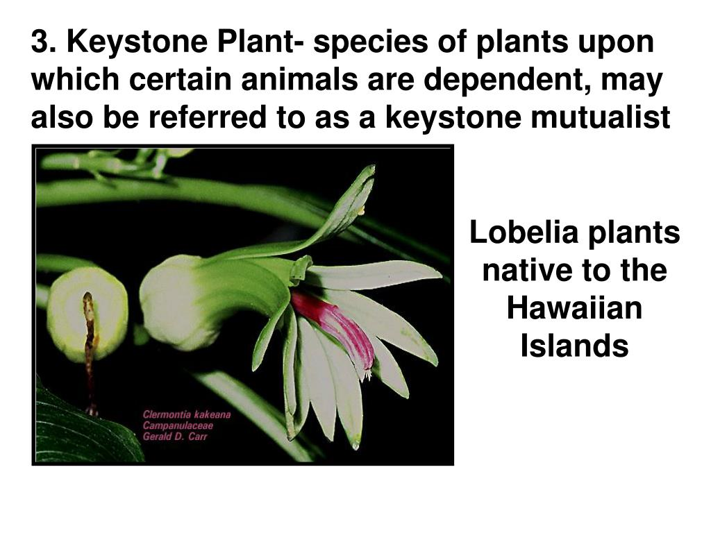 3. Keystone Plant- species of plants upon which certain animals are dependent, may also be referred to as a keystone mutualist