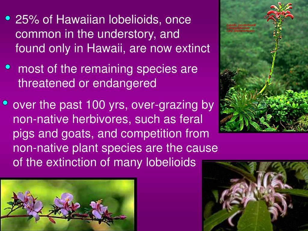 25% of Hawaiian lobelioids, once