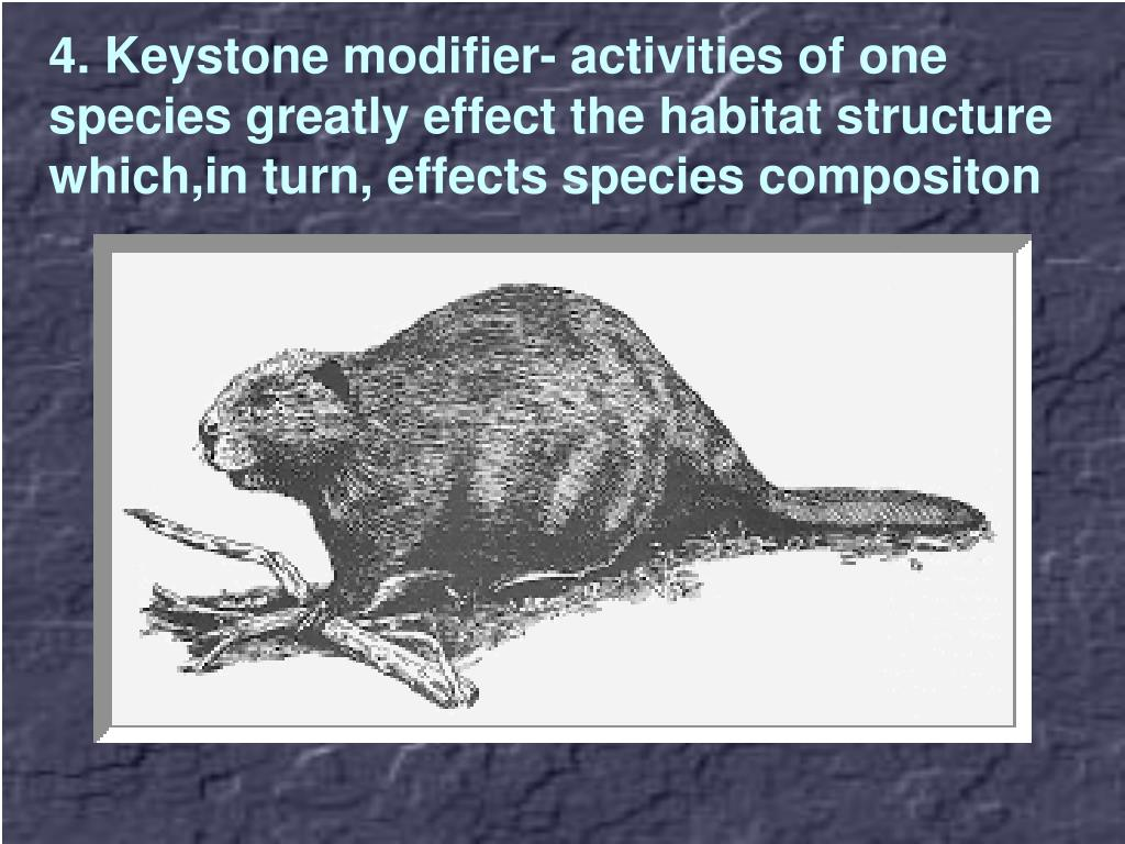 4. Keystone modifier- activities of one species greatly effect the habitat structure which,in turn, effects species compositon