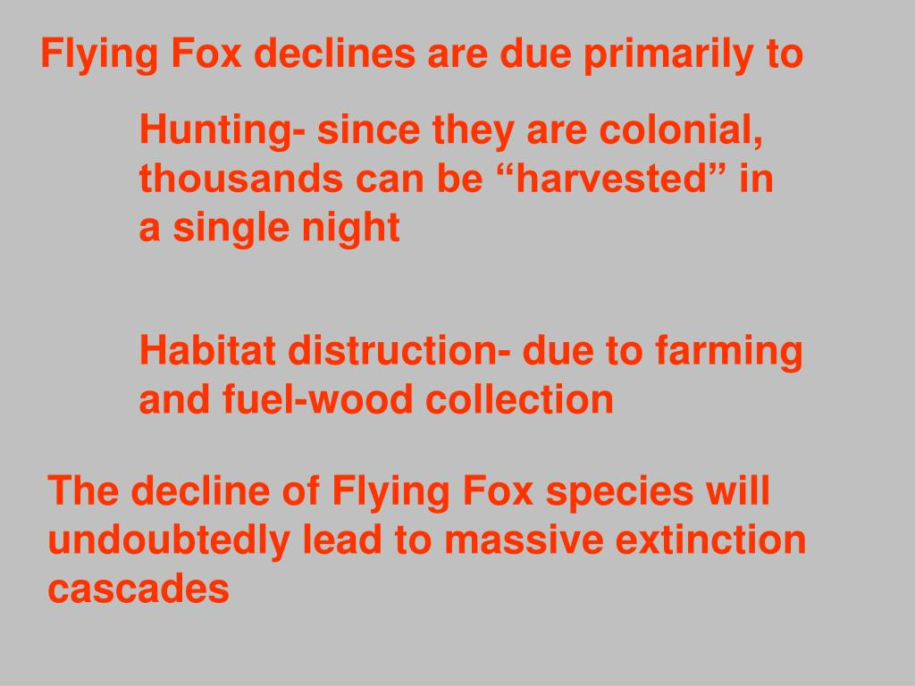 Flying Fox declines are due primarily to