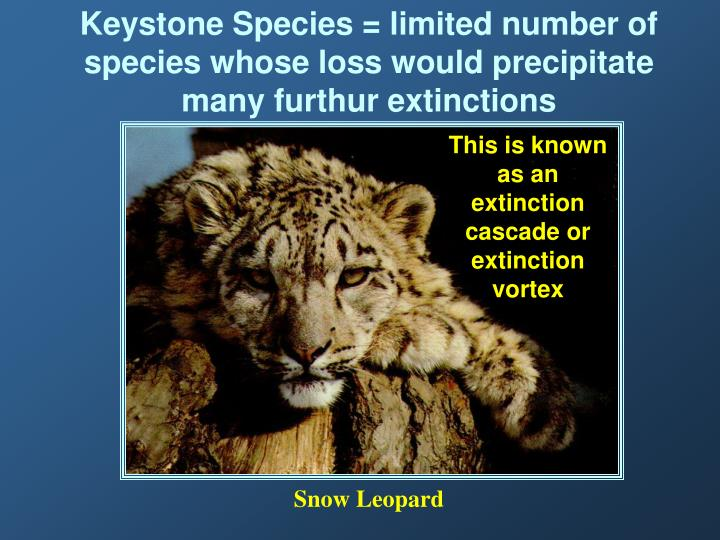 Keystone Species = limited number of species whose loss would precipitate many furthur extinctions