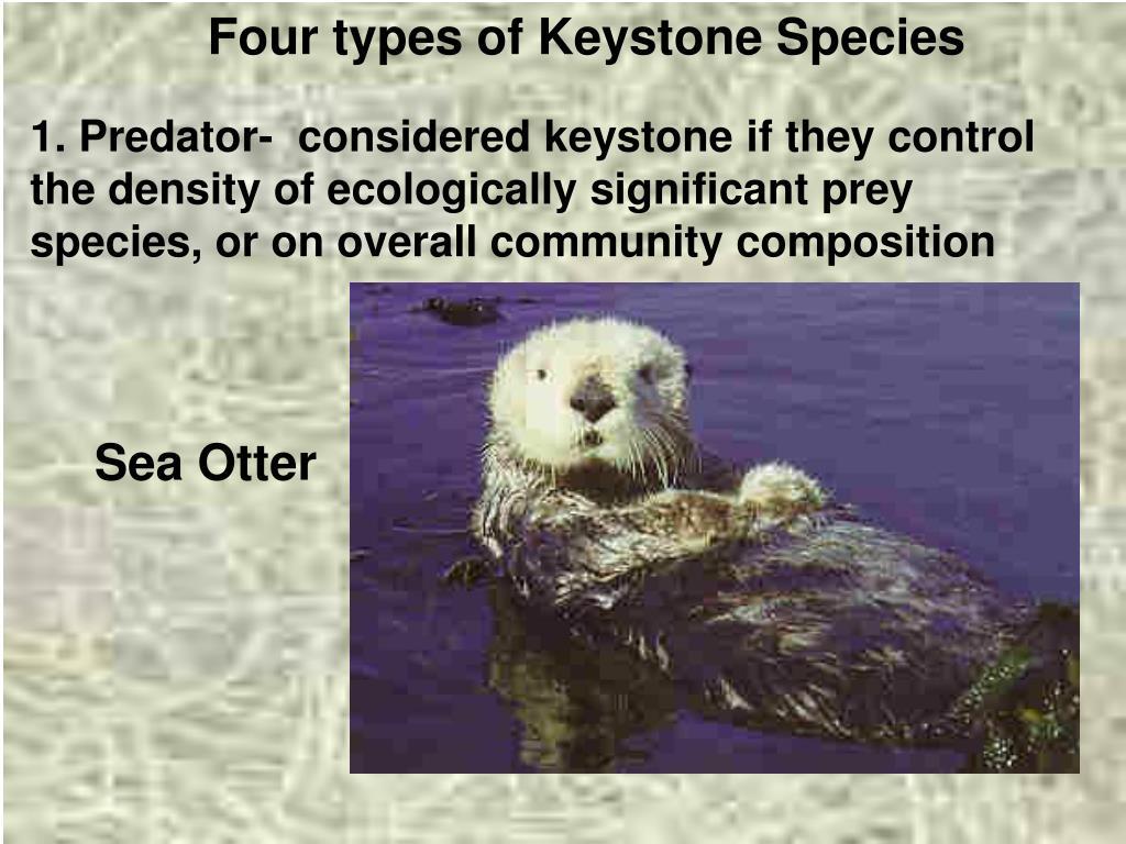 Four types of Keystone Species