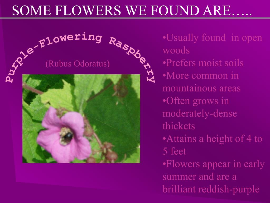 SOME FLOWERS WE FOUND ARE…..