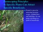 farmscaping principles 4 specific plants can attract specific beneficials