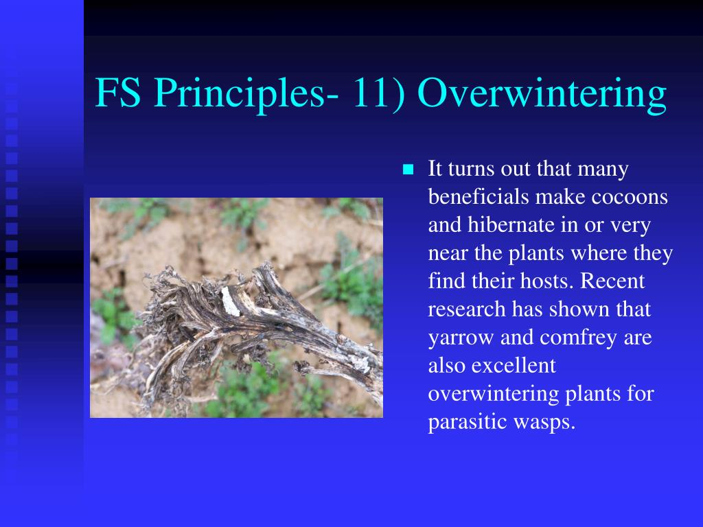 FS Principles- 11) Overwintering