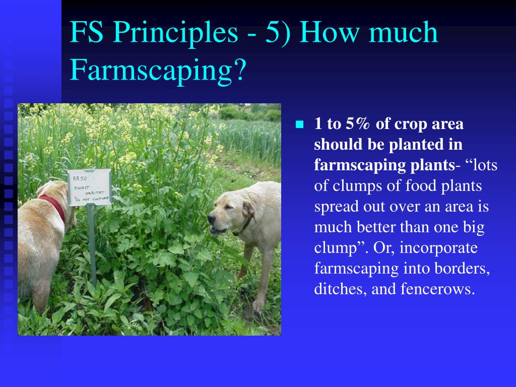 FS Principles - 5) How much Farmscaping?