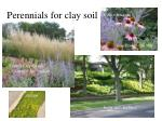 perennials for clay soil