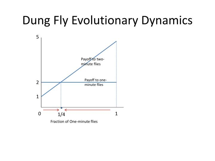 Dung Fly Evolutionary Dynamics