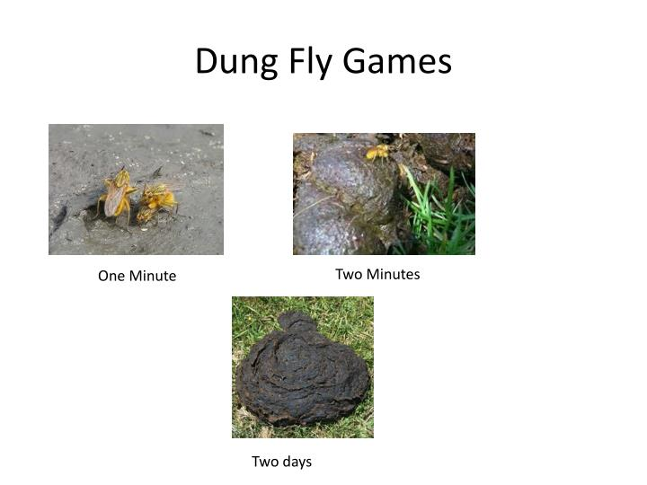 Dung Fly Games