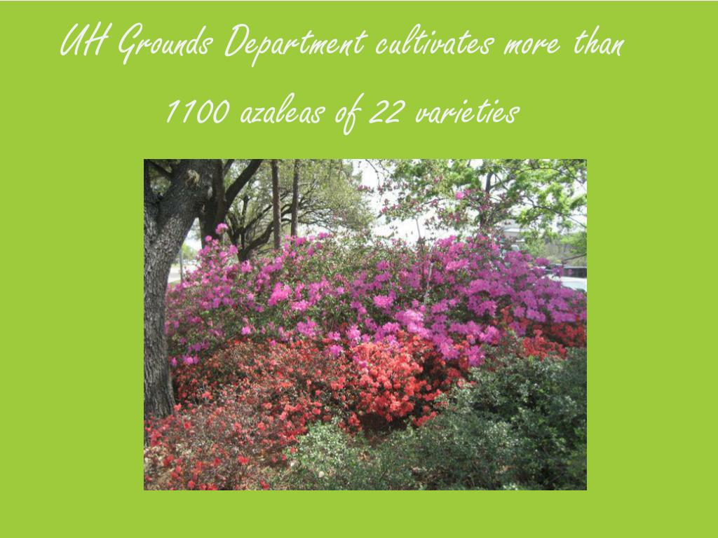 UH Grounds Department cultivates more than