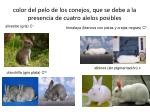 color del pelo de los conejos que se debe a la presencia de cuatro alelos posibles