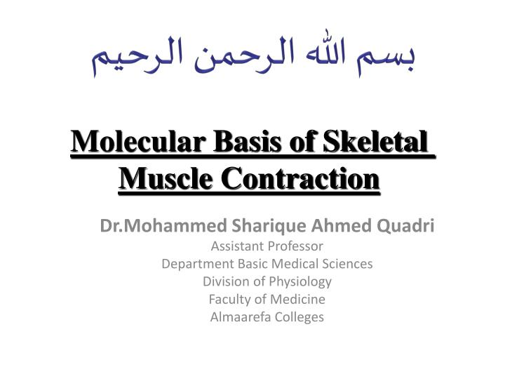 molecular basis of skeletal muscle contraction n.