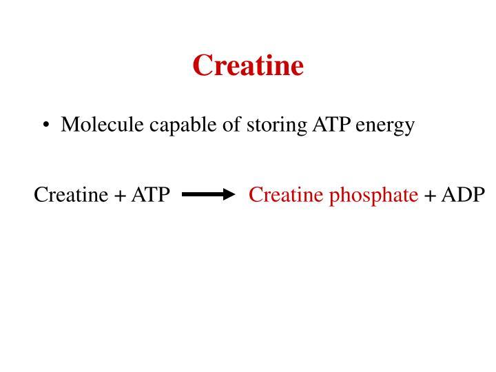 Creatine + ATP