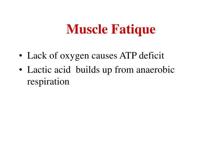 Muscle Fatique